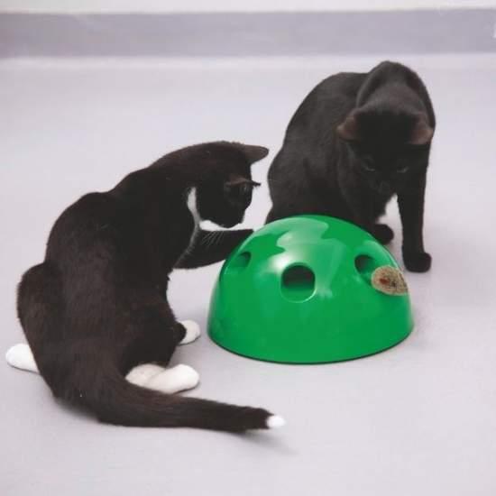 dating de viteză pentru pisici site- ul de dating pentru drepturile animalelor